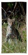 Bobcat On The Prowl Beach Towel