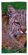 Bobcat Sedona Wilderness Beach Towel