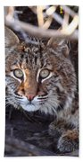Bobcat Squared Beach Towel