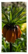 Bold And Showy Orange Crown Imperial Flower  Beach Towel