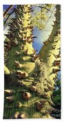Bombacaceae - Floss Silk Tree - Chorisia Speciosa Hawaii Beach Towel