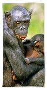 Bonobo Pan Paniscus Mother And Infant Beach Towel