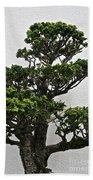 Bonsai Pine Beach Towel