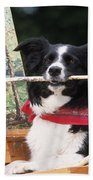 Border Collie At Painting Easel Beach Towel