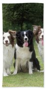 Border Collie Dogs Beach Towel