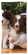 Border Collie Puppies In Plant Pot Beach Towel