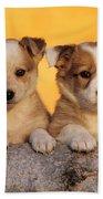 Border Collie Puppies Beach Towel