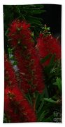 Bottle Brush Beach Towel