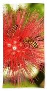 Powder Puff Flower With Bees Beach Towel