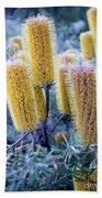 Bottlebrush Beach Towel