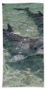Bottlenose Dolphin In Shallow Lagoon Beach Towel