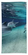 Bottlenose Dolphins In Shallow Water Beach Towel