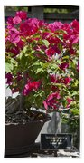 Bougainvillea Bonsai Tree Beach Towel