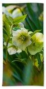 Bouquet Of Lenten Roses Beach Towel