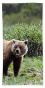 Bow Lake Bear Beach Towel