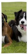 Boxer And Border Collie Beach Towel