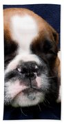 Boxer Puppy Sleeping Beach Towel by Weston Westmoreland
