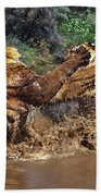 Boxing Bengal Tigers Wildlife Rescue Beach Towel