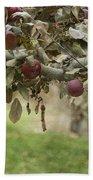 Branch Of An Apple Tree Beach Towel by Juli Scalzi