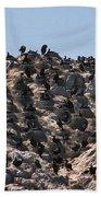 Brandts Cormorant Colony Beach Towel