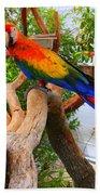 Brazilian Parrot Beach Towel
