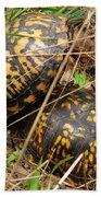 Breeding Box Turtles Beach Towel