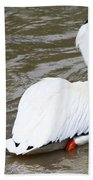 Breeding Plumage Beach Towel
