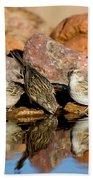 Brewers Sparrows At Waterhole Beach Towel