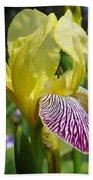 Bright Yellow Purple Iris Flower Irises Beach Towel