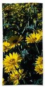 Brillant Flowers Full Of Sunshine. Beach Towel
