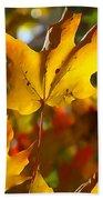Brilliant Autumn Light And Color Beach Towel