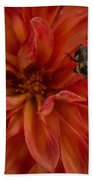 Brilliant Red Dahlia Beach Towel
