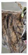Brindle Greyhound Dog Usa Beach Towel