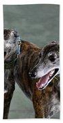 Brindle Greyhound Dogs Usa Beach Towel