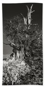 Bristlecone And Wildflowers In Black And White Beach Towel