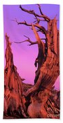 Bristlecone Pine At Sunset White Mountains Californa Beach Towel