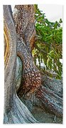 Bristlecone Pine On Ramparts Trail In Cedar Breaks National Monument-utah  Beach Towel