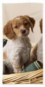 Brittany Dog Puppies In Basket Beach Towel