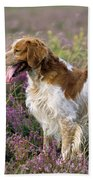 Brittany Dog, Standing In Heather, Side Beach Towel