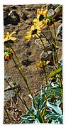Brittlebush On Borrego Palm Canyon Trail In Anza-borrego Desert Sp-ca Beach Towel
