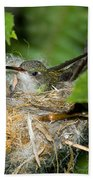Broad-billed Hummingbird In Nest Beach Towel