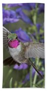 Broad-tailed Hummingbird Beach Towel