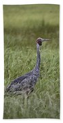 Brolga  Beach Towel