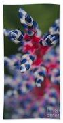 Bromeliad - Aechmia Dichlamydea - Guzmania Lingulata Beach Towel
