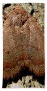 Bronze Moth Beach Towel