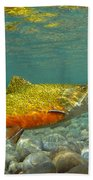 Brook Trout And Coachman Wet Fly Beach Towel