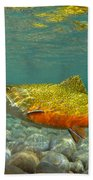 Brook Trout And Royal Coachman Beach Towel