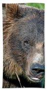 Brown Bear Beach Towel