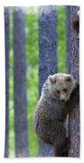 Brown Bear Climbing Lesson Beach Towel