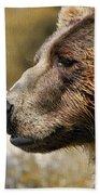 Brown Bear Golden Morning Beach Towel